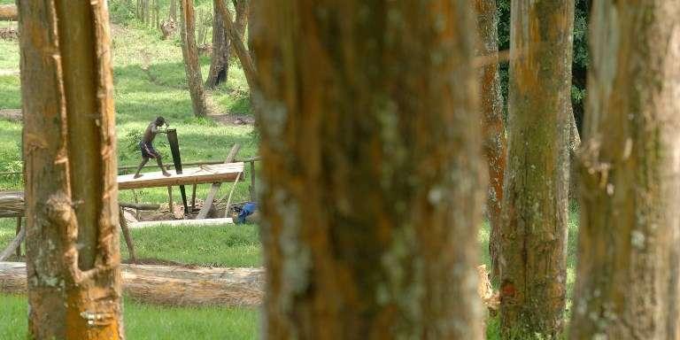 Un bûcheron à Lushebere, dans l'est de la RDC, en 2009.