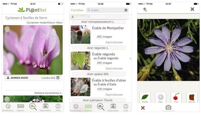 PlantNet permet d'identifier une plante à partir d'une photo.