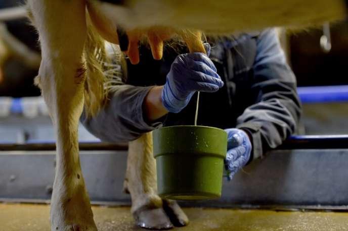 Une exploitation laitière, à Plessé ( Loire-Atlantique), le 14 février 2017.
