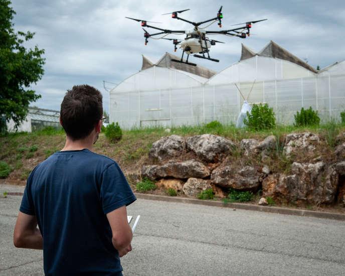 Vol d'un drone adapté pour pulvériser des biopesticides, à Antibes.