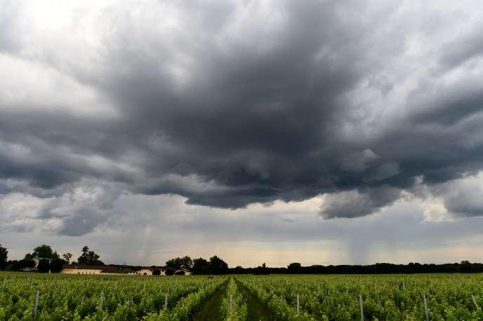 Ciel orageux au-dessus de vignes dans le Médoc, le 3juin.