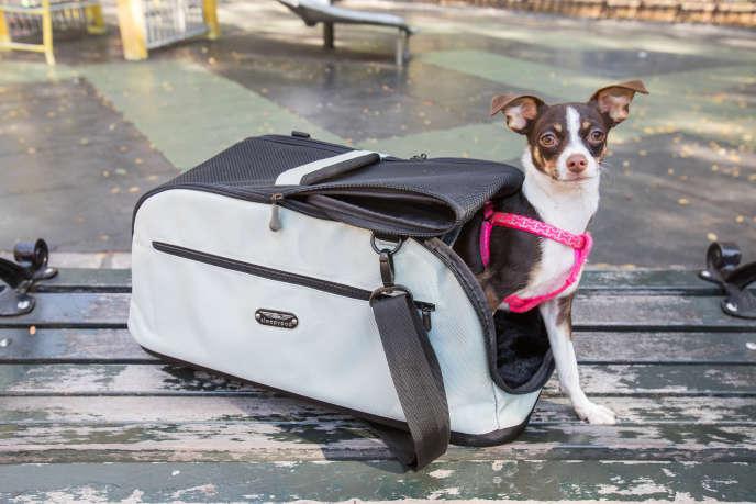d961b6ff21a5f5 Le haut de gamme   le sac de transport pour animaux Sleepypod Air In-Cabin