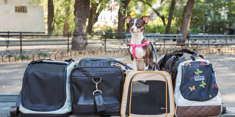 Chien Fait Ses Besoins La Nuit notre sélection des meilleurs sacs de transports pour votre