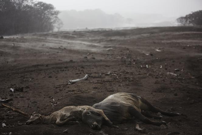 L'éruption du volcan de Feu au Guatemala a fait de nombreuses victimes.