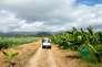 Utilisé plus de vingt ans dans les bananeraies, le Chlordécone contamine aujourd'hui la quasi-totalité des antilles françaises.