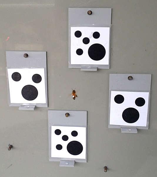 Une abeille cherche le morceau de papier avec le moins de points.