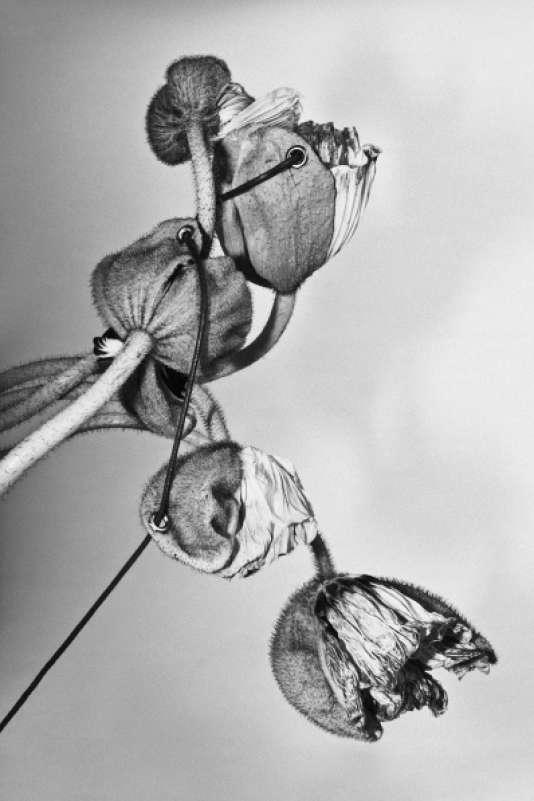 Sans titre (2015), les pétales percés et lacés photographiés en noir et blanc par Emmanuel Le Cerf.