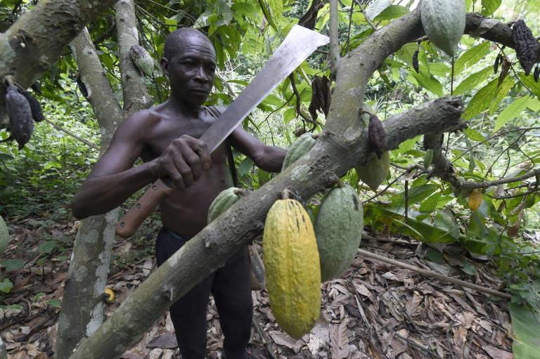 Dans une plantation dans le sud-ouest du Nigeria, en juin 2018.