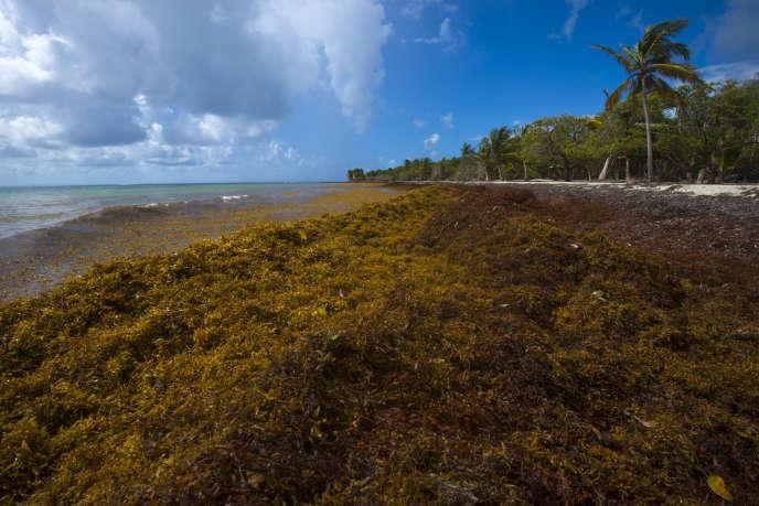 Au Gosier, en Guadeloupe, le 23 avril 2018.