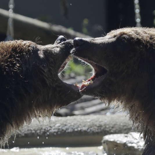 L'ours Gianni, à gauche, et Samjouentensemble auBioparcode Rome, le 24 mai 2018.