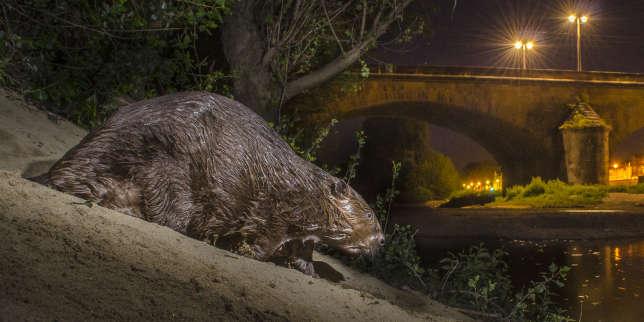 Un castor, dans le centre d'Orléans.
