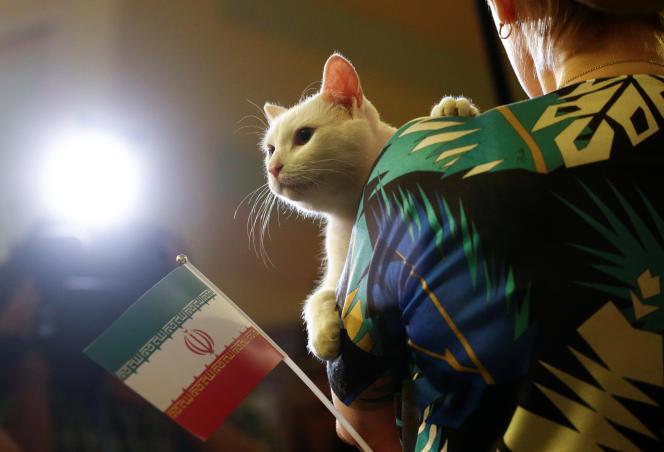 Achille le chat, à Saint-Pétersbourg, le 15 juin.