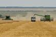 Moissonnage d'un champ de blé dans la région de Stavropol (sud de la Russie).