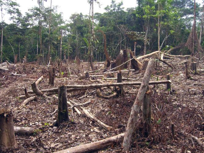 Défrichement en Amazonie colombienne.
