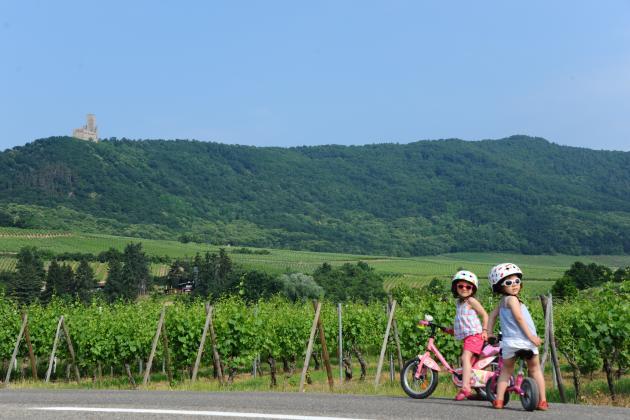 Organisée par les acteurs du tourisme alsacien, le SlowUp de la Route des vins d'Alsace, un parcours d'une journée fermé à la circulation,connaît un succès grandissant.