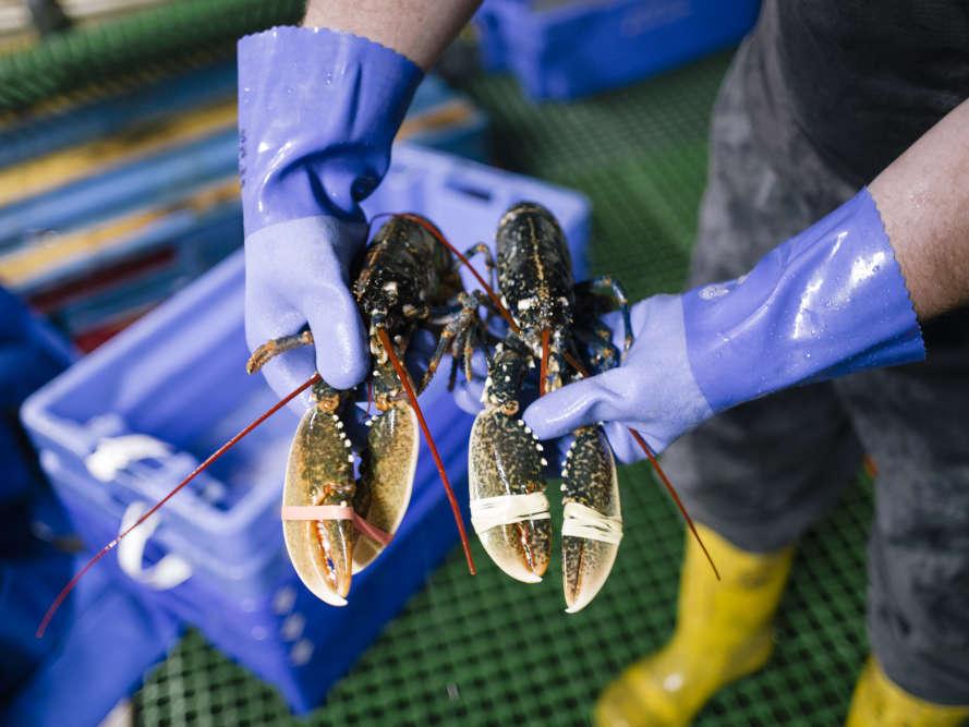 Faute de quotas disponibles, les pêcheurs de Selsey se sont tournés en masse vers les crustacés, qui ne sont pas sujets aux règles européennes. Mais cela se traduit par une surpêche de ces espèces.