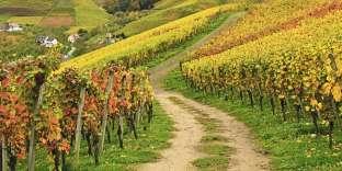 Des vignes à Ortenau, sur la route des vins du Bade-Wurtemberg, en Allemagne.