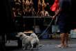 Un homme et son chien devant un étal de viande de chien rôtie, à Yulin, en Chine, en 2018.