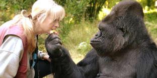 Koko et l'éthologue qui l'a élevée, Penny Patterson.