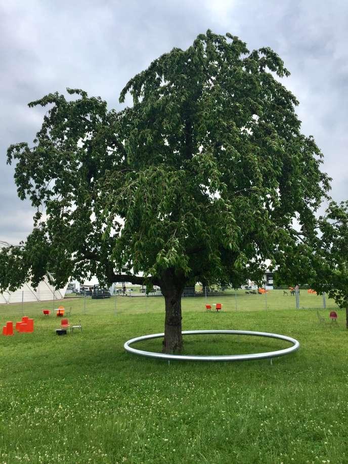 The Ring, banc outdoor des frères Bouroullec, comme une bague autour d'un cerisier, Vitra Campus, juin 2018.