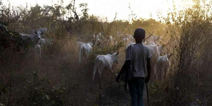 Un jeune vacher dans l'Etat de Nasarawa, dans le centre du Nigeria, en janvier 2018.
