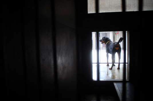 Un chien patiente dans une cage du refuge de la SPA de Gennevilliers (Hauts-de-Seine).