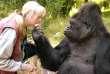 Koko et Penny Patterson.