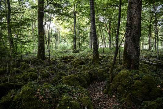 Le premier parc naturel national à caractère forestier sera créé en 2019, sur le plateau de Langres (Champagne-Bourgogne).