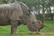 Sudan, dernier rhinocéros mâle blanc du Nord, est mort en mars 2018 à l'âge de 45 ans dans la réserve kényane d'Ol Pejeta.