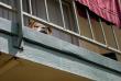 «Mme Dupont ne peut plus ouvrir ses quatre fenêtres pour aérer son appartement.»