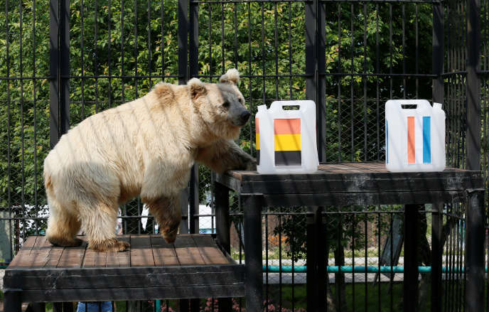 L'ours russe Pamir est lui aussi bien à la peine pour prédire qui, de la France ou de la Belgique, gagnera un ticket pour la finale du Mondial russe.