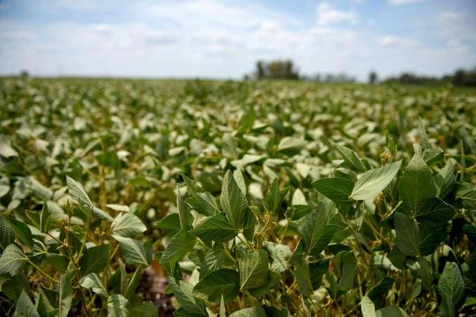 Un champs de soja en Argentine, traité au Roundup de Monsanto, en février 2018.