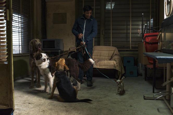 Dans« Dogman», de Matteo Garrone, Marcello Fonte incarne un toiletteur pour chiens.