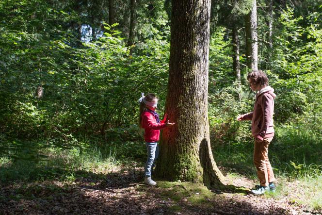 Enfants et parents jouent à reconnaître un arbre, les yeux bandés.