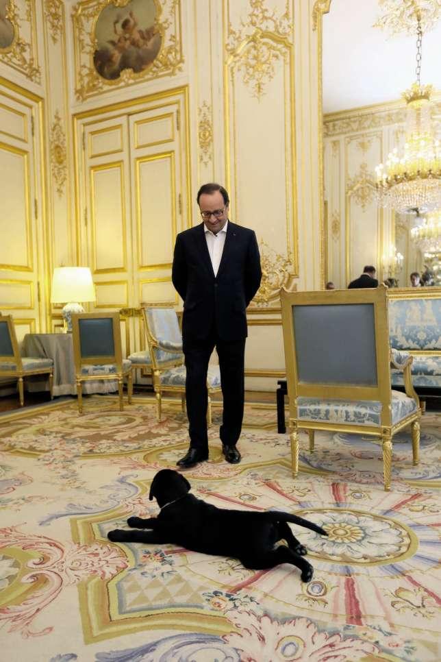 Philae, la chienne labrador de François Hollande, est arrivée à l'Elysée en décembre 2014. Depuis que son maître a quitté le Château, elle l'accompagne dans ses bureaux de la rue de Rivoli.