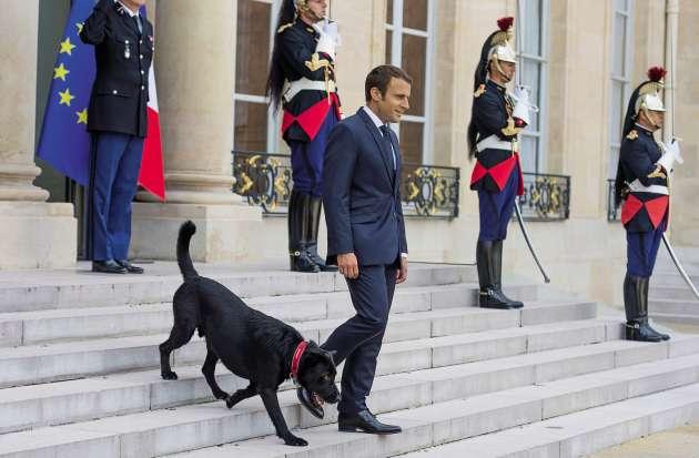 Emmanuel Macron avec Nemo sur le perron de l'Elysée, le 28 août 2017.