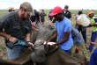 Prélèvement d'une corne sur un rhinocéros anesthésié, en 2016 àKlerksdorp, en Afrique du Sud.