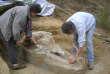 Des chercheurs découvrent le crâne du« mastodonte de Toulouse»