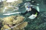 Les barrières de corail, qui ne couvrent que 0,1 % des océans, abritent en effet près du tiers de la biodiversité océanique.