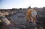 Excavations sur le site de Shubayqa 1 en Jordanie