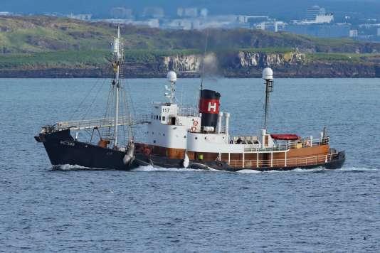 l'unique entreprise islandaise de chasse au rorqual commun, Hvalur hf, a été autorisée en avril à reprendre la mer.