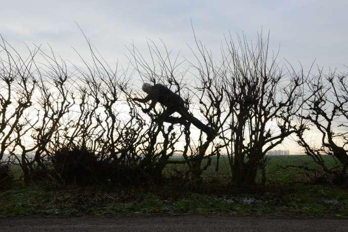 Andy Goldsworthy dans« Penché dans le vent» («Leaning Into The Wind»), deThomas Riedelsheimer.
