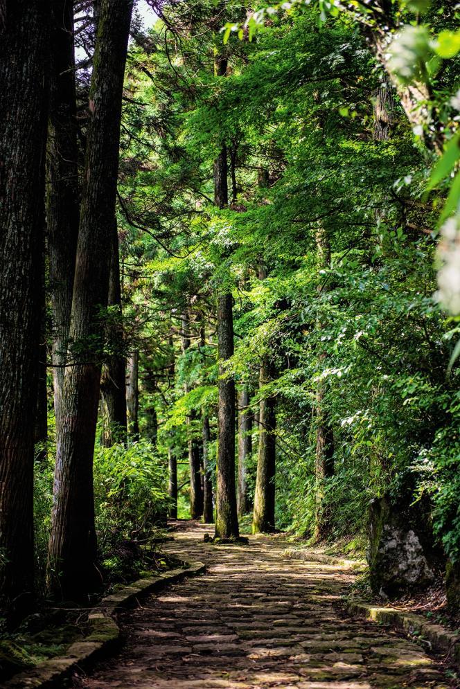 Les arbres agissent sur l'organisme par le biais des phytoncides, des molécules qu'ils diffusent dans l'air pour se défendre contre les bactéries et les champignons.