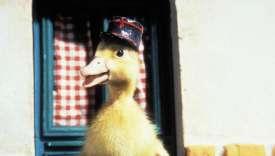 Saturnin, le petit canard de Jean Tourane, 1964.