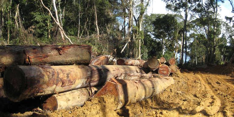 Grumes à la frontière entre le Cameroun et le Gabon, en octobre 2007.