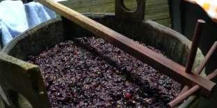 Le moût de raisin est du jus de raisin épais obtenu par pressurage des grappes. Le liquide obtenu est composé de pulpe, de peaux, de pépins.