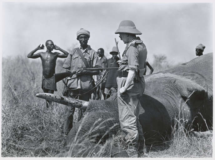 Chasse à l'éléphant, en Afrique, en 1928.