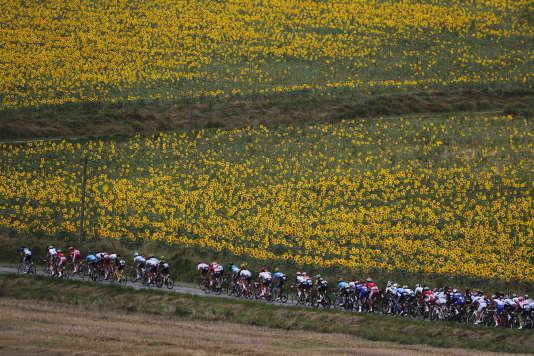 En plissant les yeux et en regardant cette photo très vite, on pourrait croire qu'il s'agit du Maillot jaune. Mais en fait non, il s'agit d'un champ de tournesols.