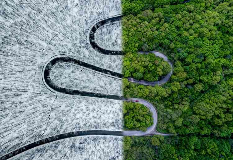 1er prix, catégorie abstrait :« Weather Snake». La photo représente une route traversant une forêt non loin de Derna, en Roumanie.