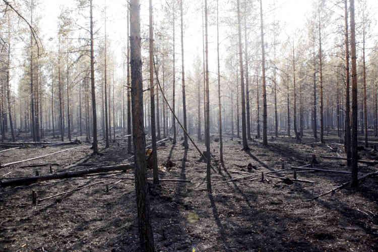Près de la ville de Ljusdal, en Suède, le 22juillet. Les autorités ont annoncé jeudi26juillet au matin que les principaux incendies étaient enfin sous contrôle.